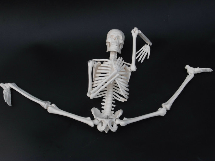 Simple Human Bone Model 17.7in